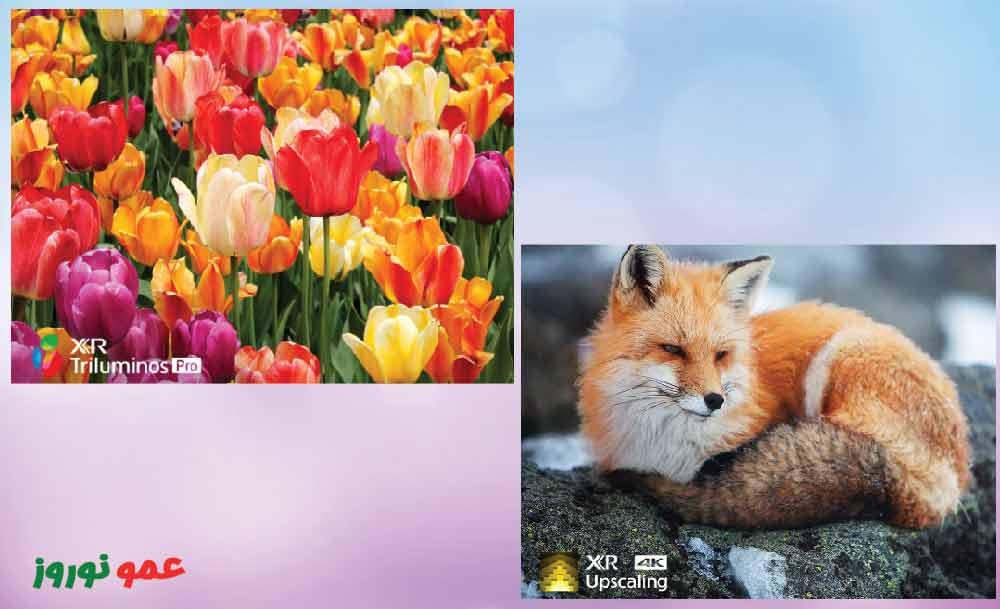 کیفیت تصویر 4K در تلویزیون سونی X95J